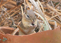 Chipmunks are so Cute von Robert E. Alter / Reflections of Infinity, LLC