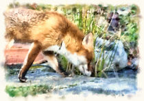 Town fox, country fox von Graham Prentice