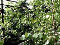 overgrown structure I von Oliver Metz