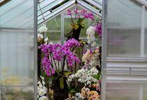 Orchideen-Kindergarten by joschio