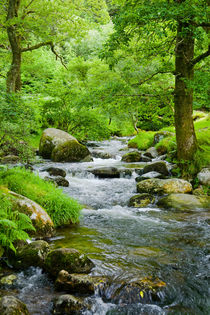 Small stream in a forest with oak trees by kbhsphoto