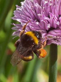 Bee-again