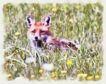 Fox Cub in Spring von Graham Prentice
