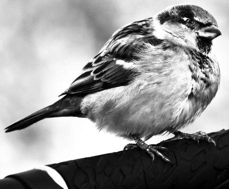 Birdcloseps