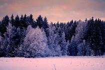 märchenhafter Wald von tinadefortunata
