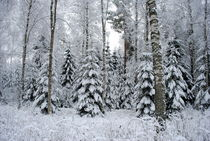 Winterwald by tinadefortunata