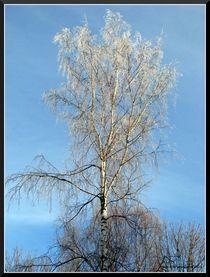 Winter by Geir Ivar Ødegaard