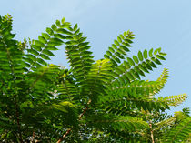 Palmen gleich von vanderson