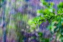 crazy rain von Victor Bezrukov
