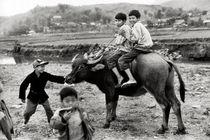Büffelreiten - Vietnam von captainsilva