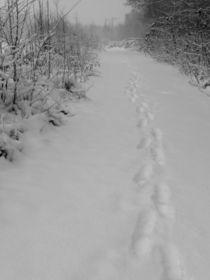 silent footsteps von Oliver Metz