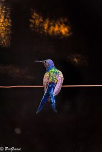hummingbird in color by bruna grassi