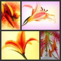 Collage Lily von Ina Hartges