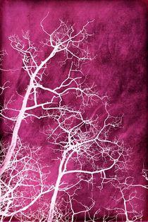 white & pink by Priska  Wettstein