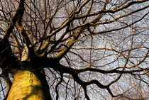 caleder - february - trees in winter by Oliver Metz