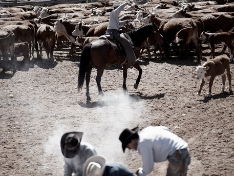 Cowboys-branding
