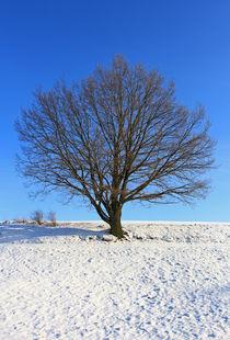 Eiche im Winter von Wolfgang Dufner