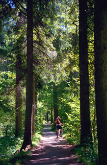 Tegernsee Woodland Trail Germany by Kevin W.  Smith