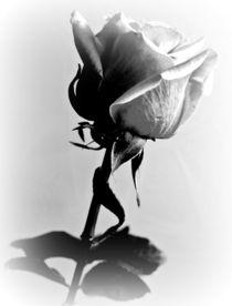 La rose 1 by Ina Hartges