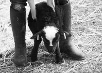 Young girl holding a newborn black lamb von kbhsphoto