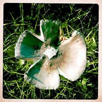 autumn mushroom von Wiebke Wilting