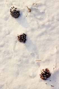 Pine Cones by Philipp Götze