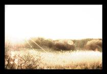 sunrays by henry75