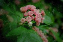 vergessene Blüten von tinadefortunata