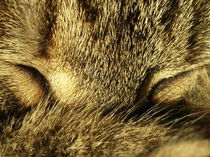 Katzenporträt by Andrea Meister