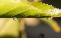 Droplet von Sarmad Bhatti