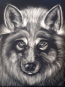 Wolf Stare by Christi Ann Kuhner