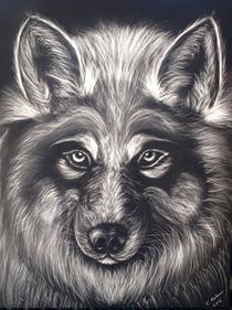 Wolf Stare von Christi Ann Kuhner
