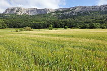 Wheat fields at spring by a mountain by Sami Sarkis Photography