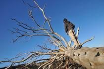 Boy on tree trunk watching lava von Sami Sarkis Photography