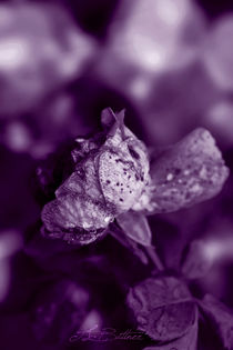 Indigo Rose by Tracy Bittner