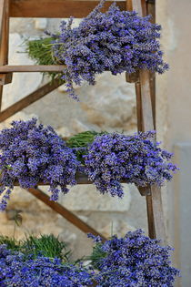 Lavender bunches on shelves for sale at market by Sami Sarkis Photography