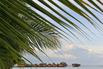 Water bungalows seen through palm leaves by Sami Sarkis Photography