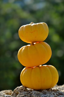 Stack of three yellow mini-pumpkins von Sami Sarkis Photography