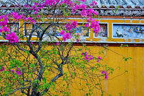 Flowered tree by Sami Sarkis Photography