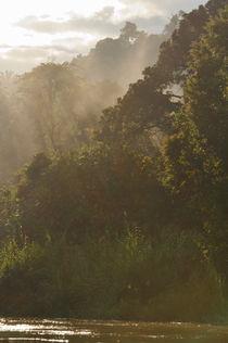 Kinabatangan River bank at sunrise by Sami Sarkis Photography