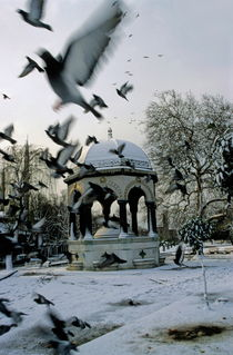 Pigeons flying near a fountain under the snow by Sami Sarkis Photography