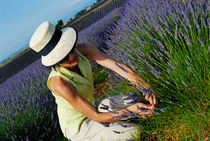 Woman picking up lavender flowers in field by Sami Sarkis Photography