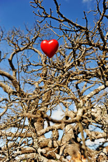 Heart shape hung on dead tree branches von Sami Sarkis Photography