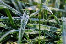 Frost grass von Sami Sarkis Photography