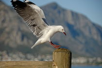Seagull landing on pole von Sami Sarkis Photography
