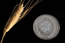 Wheat next to a French fifty franc coin von Sami Sarkis Photography