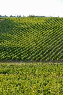 Chianti Vineyards von Sami Sarkis Photography