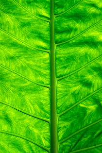Green leaf by Sami Sarkis Photography