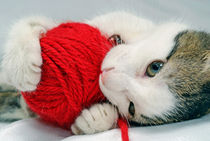 Kitten playing with red ball of yarn by Sami Sarkis Photography