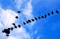 Pigeons perched on overhead wire von Sami Sarkis Photography